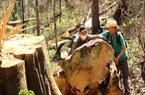 Lâm Đồng: Đề nghị xử lý người đứng đầu 4 đơn vị để mất rừng