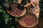 Giá nông sản hôm nay 1/5: Xuất khẩu cà phê tháng 4/2021 giảm mạnh, giá tiêu đi ngang