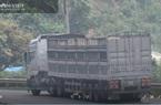 Hà Giang: Xử phạt xe quá tải hơn 150% trên quốc lộ