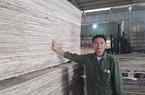 Thái Nguyên: Bóc gỗ, làm ván ép, lão nông dân tộc Sán Dìu hái ra tiền