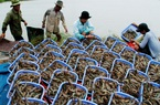 Nhật Bản đột nhiên tăng mua loài thủy sản này của Việt Nam dù giá đắt hơn sản phẩm của nước khác