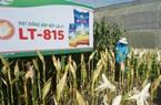 Thu nghìn tỷ từ thuốc bảo vệ thực vật