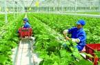Khơi dậy khát vọng phát triển đất nước: Nông dân, nông thôn có vai trò thế nào?