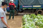Gia Lai: Tạm giữ 9X lái xe tải chở 3 tấn chuối nghi là chuối cắt trộm từ nông trại của Hoàng Anh Gia Lai