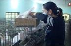 Thái Bình: Nuôi thỏ la liệt, vì sao anh nông dân giỏi lại cho thỏ nghe nhạc trữ tình?