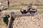 Phú Yên: Đề xuất xây thêm nhà máy chế biến tinh bột sắn ở huyện Sơn Hòa đang vấp phải luồng ý kiến gì?