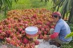 Trung Quốc, Ấn Độ thờ ơ nhập khẩu, giá loại nông sản từng được Trung Quốc mua nhiều nhất bỗng tụt dốc