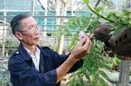 """Đắk Lắk: Vườn lan rừng hàng nghìn giò của lão nông làm nghề """"bảo mẫu"""", có loài lan rừng suýt tuyệt chủng"""