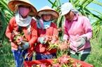 Vì sao Trung Quốc đột nhiên mua nhiều loại trái cây này của Việt Nam giúp giá tăng gấp đôi, nông dân lãi lớn?