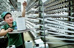 Bình Dương trao giấy phép cho 5 doanh nghiệp FDI có tổng vốn đầu tư gần 1 tỷ USD