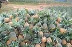 """Bắc Giang: Hàng chục nghìn tấn nông sản nguy cơ bị """"dồn ứ"""" ở huyện Lục Nam"""