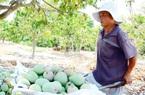 Tìm lối ra cho nông sản mùa dịch Covid 19 (bài 1): Đổi mới tư duy, sáng tạo tiêu thụ nông sản