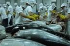Xuất khẩu cá ngừ tăng tốc