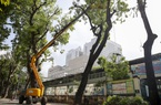 Hà Nội: Dùng xe nâng người dài 26 mét cắt tỉa hơn 20.000 cây xanh nguy hiểm
