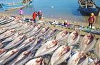 Mỹ bất ngờ cấm nhập khẩu hải sản từ một công ty đánh bắt Trung Quốc