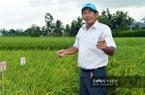 Bảo vệ thương hiệu gạo ST25 trước doanh nghiệp nước ngoài: Vừa phản đối vừa xúc tiến đăng ký