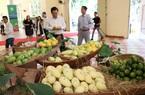 Loại quả trồng nhiều nhất Đồng Tháp phải cạnh tranh với sản phẩm của Campuchia trên đất Trung Quốc
