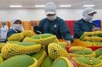 Tiền Giang: Bằng cách nào doanh nghiệp này xuất khẩu 70 tấn thanh long, xoài mỗi ngày giữa đại dịch Covid-19?