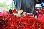 Bình Định: Bán một ký ớt không đủ tiền mua gói mì tôm