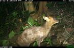 TT-Huế: Vừa phát hiện ở Khu bảo tồn thiên nhiên Phong Điền loài mang quý hiếm tưởng như đã tuyệt chủng