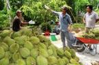 Giá nhiều trái cây chạm đáy, riêng giá sầu riêng vẫn neo cao, nông dân có sầu không sầu vì Covid-19