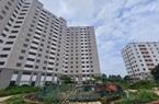 Xót xa cảnh nhà tái định cư ở Hà Nội xây xong rồi bỏ hoang