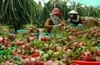 Trung Quốc đã mua 2,5 triệu tấn trái cây của Việt Nam, lại đồng ý mua thêm khoai lang, ớt với điều kiện này