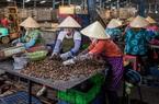 Nghịch lý: Hạt điều Bình Phước nổi tiếng thơm ngon nhưng giá bán không cao