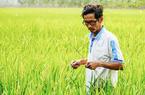 """""""Giảng viên nông dân"""" tốt nghiệp lớp 6 có công lai tạo gần 60 giống lúa ở tỉnh An Giang là ai?"""