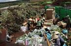Vụ việc hàng trăm nghìn cành hoa đổ bỏ: Sở NNPTNT Lâm Đồng khẳng định đã gửi văn bản cho Bộ nhưng bị từ chối