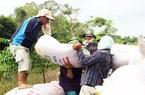 Giá gạo xuất khẩu của Việt Nam bất ngờ giảm mạnh, đối thủ cạnh tranh giảm ít là do đâu?