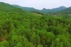 Kinh tế rừng đang có vị trí rất quan trọng trong đời sống của người dân Tuyên Quang