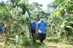Khuyến nông sẽ kết nối nông dân với thị trường để không còn cảnh nhà máy đói nguyên liệu mà nông dân vẫn ế