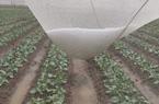 Mưa đá bất ngờ xuất hiện ở Lâm Đồng, Sóc Trăng, người dân mang chậu ra hứng