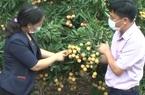 Nữ cán bộ nông nghiệp có công đưa nông sản Việt vươn ra thị trường thế giới