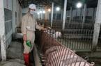 Nghịch lý: Bán một con gà chỉ mua được... 2kg thức ăn chăn nuôi