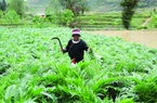 Người Dao ở Nặm Đăm làm du lịch, trồng cây dược liệu thu tiền tỷ