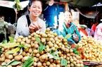 Vì sao Campuchia phải tìm đường đưa 50.000 tấn nhãn vào Việt Nam tiêu thụ?