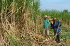Nhập khẩu đường từ 5 nước ASEAN tăng gấp 10 lần, có bất thường?