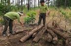 Lâm Đồng: Đề nghị điều tra xử lý nghiêm vụ chống đối, hành hung cán bộ tuần tra, bảo vệ rừng