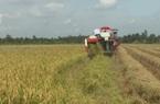 Bến Tre: Tháo gỡ khó khăn trong vụ thu hoạch lúa hè thu ở huyện Giồng Tôm