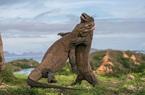 Dự án 'Công viên kỷ Jura' đang được xây dựng ở Indonesia bất chấp cảnh báo của UNESCO