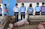 TT-Huế: Mô hình Tổ hợp 4F giúp người chăn nuôi lợn có lãi, không gây ô nhiễm môi trường
