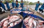 10 doanh nghiệp xuất khẩu cá tra, basa của Việt Nam không bị Mỹ áp thuế chống bán phá giá
