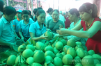 Thừa Thiên - Huế hỗ trợ đưa hộ sản xuất nông nghiệp lên sàn thương mại điện tử để tránh bị ép giá