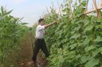 Bắc Ninh: Chỉ trồng rau sạch, HTX này có thu nhập 8 tỷ/năm