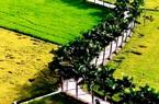 Con đường 2km trồng toàn cau là cau uốn lượn giữa cánh đồng lúa nằm ở địa phương nào của Long An?