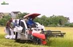 Nghệ An: Hạn chế người ra đồng vì giãn cách, huyện Yên Thành rốt ráo thu hoạch lúa hè thu trước mùa mưa lụt
