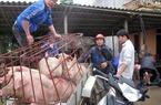 Trung Quốc ngừng nhập thịt, giá lợn giảm nhanh