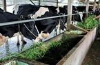 Quy hoạch phát triển TP.HCM đến 2020: Tỷ trọng GDP nông nghiệp còn dưới 1%